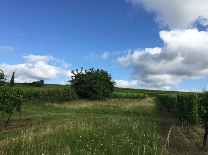 photo de Beau terrain à Balbronn